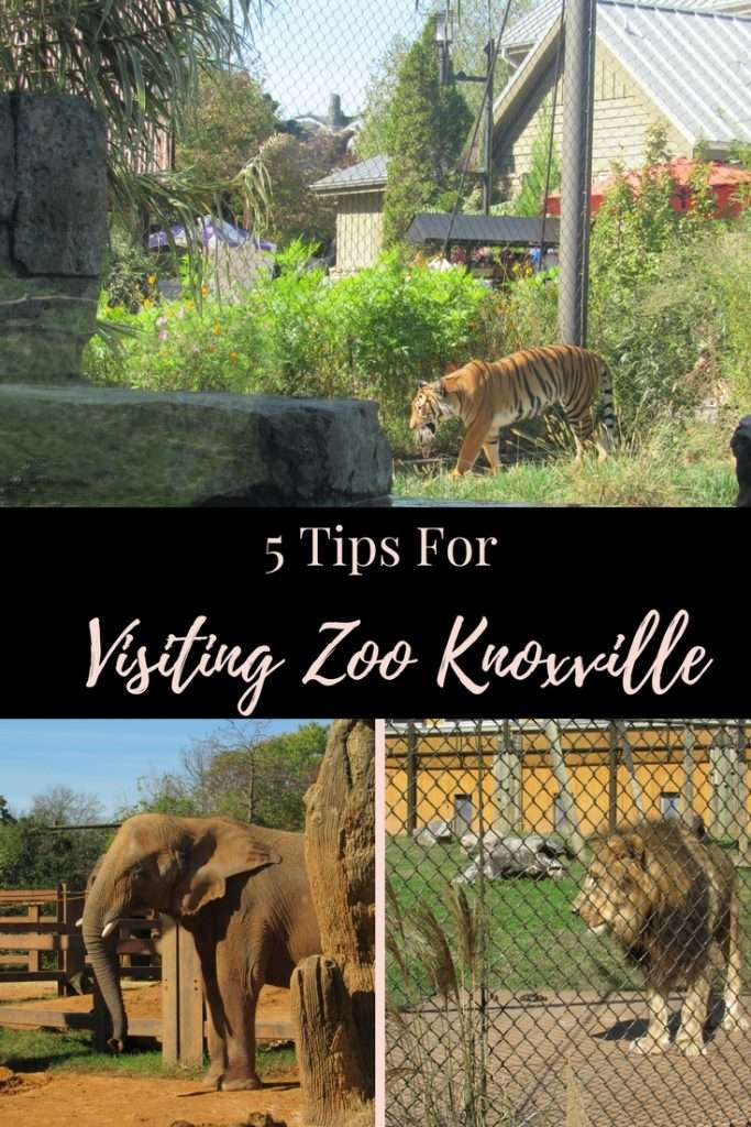 5 Tips for Visiting Zoo Knoxville | #Tennessee | #Knoxville